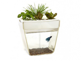 AquaFarm - Back to the Roots
